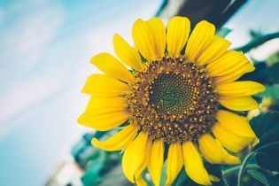 В Киеве ко Дню Независимости готовят новую выставку цветов