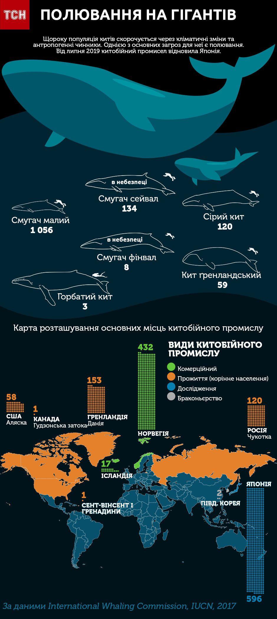 кити інфографіка
