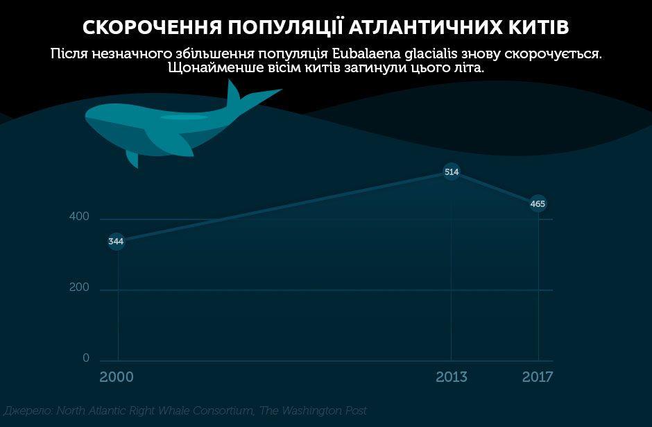 кити інфографіка 2