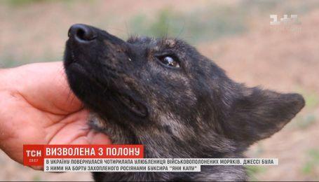 """Собака Джесси, любимица моряков с захваченного буксира """"Яны Капу"""", вернулась в Украину"""