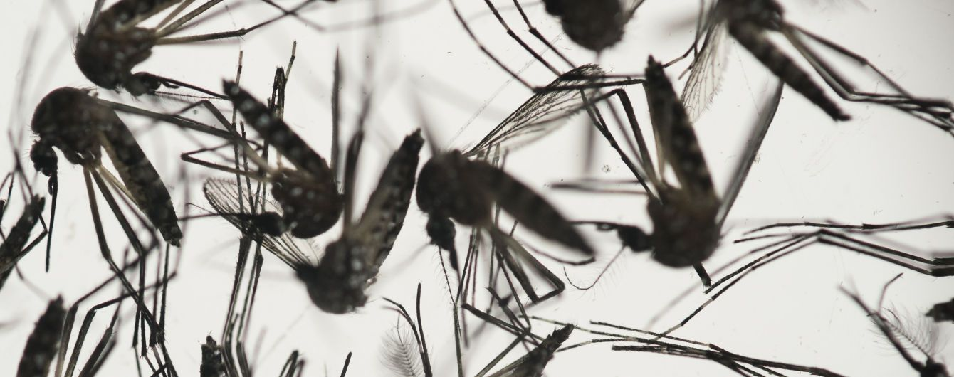 На Филиппинах объявили эпидемию - комары убили сотни людей
