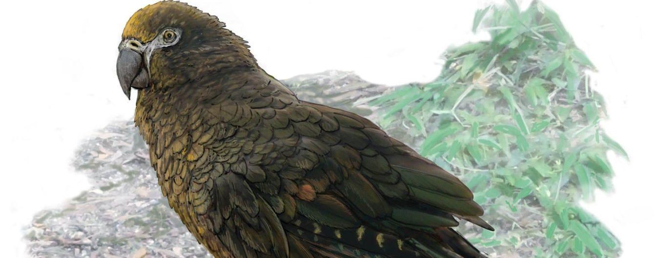 В Новой Зеландии нашли крупнейшего из когда-либо живших попугаев ростом в метр. Он мог быть каннибалом