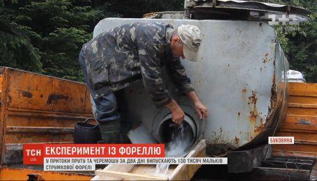 Понад 100 тисяч мальків форелі випустили на Буковині у притоки річок Прут та Черемош