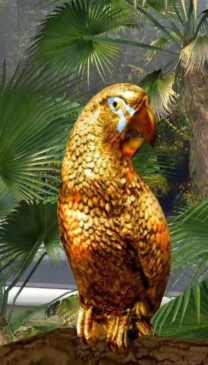 Австралійські палеонтологи знайшли найбільшого в світі папугу