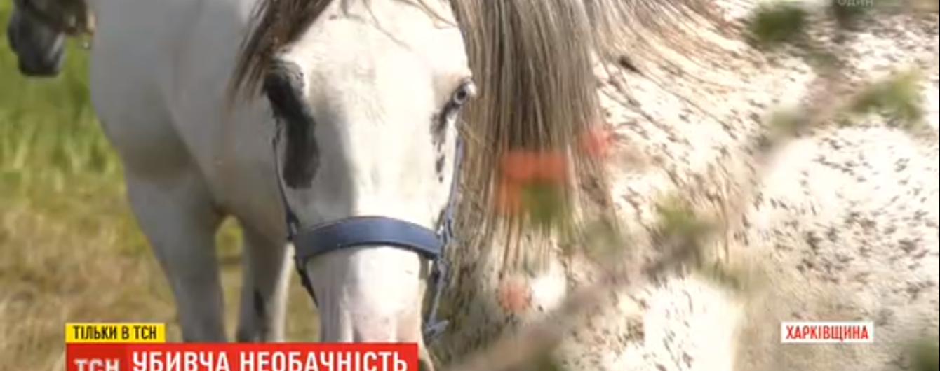 Несколько минут волокла по полю: на Харьковщине школьница погибла из-за напуганной кобылы