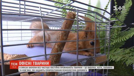 Грызут канцтовары и общаются без слов: в офисах Украине все чаще проживают животные