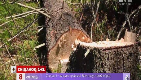 Уничтожение деревьев в Карпатах: экологическая катастрофа