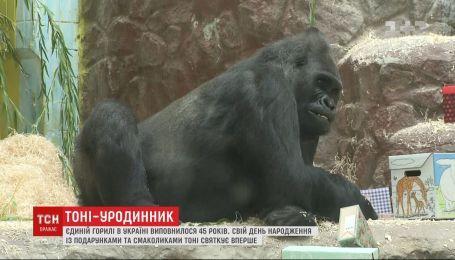 Єдиній горилі в Україні виповнилося 45 років