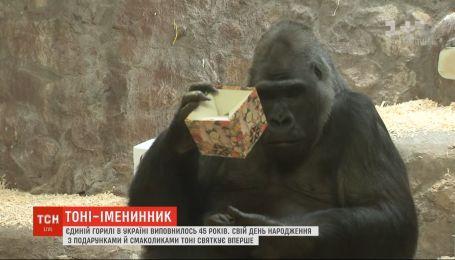 Горила Тоні відсвяткував 45-річний ювілей у столичному зоопарку