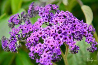 Ароматные цветы и травы – в саду, на балконе, террасе