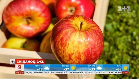 Скільки цього року коштуватиме українське яблуко і чи варто обирати імпортне