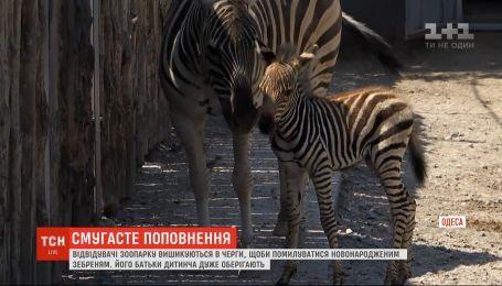 Новорожденный зебренок радует посетителей Одесского зоопарка
