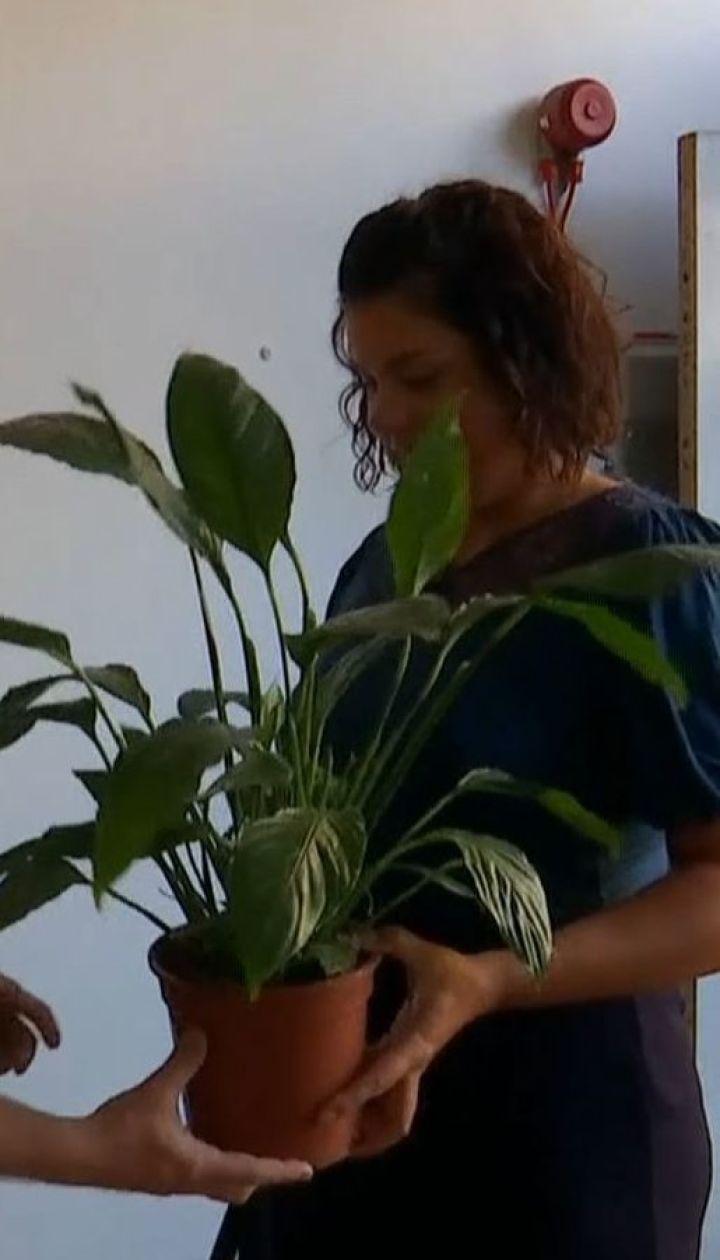 Первый 5-звездочный бесплатный отель для растений открыли в Лондоне