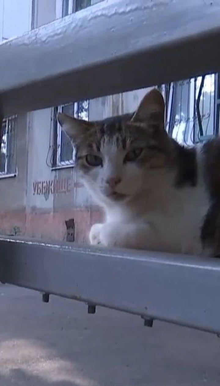 Жінка замовила прибиральнику втопити 8 новонароджених котенят через їхній м'явкіт
