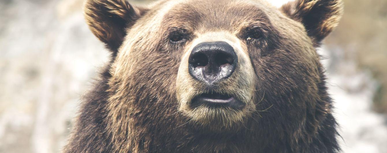 На Камчатке из-за скопления голодных медведей закрыли туристический маршрут