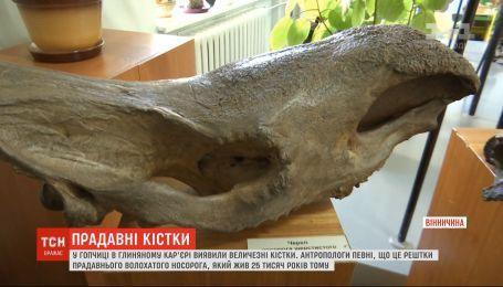 Гигантские кости, вероятно, шерстистого носорога обнаружили в Винницкой области