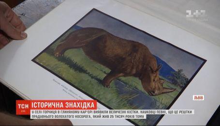 Кости гигантского доисторического животного нашли в Винницкой области