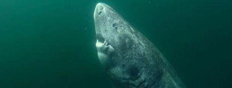 У Гренландії спіймали акулу, якій може бути понад 500 років