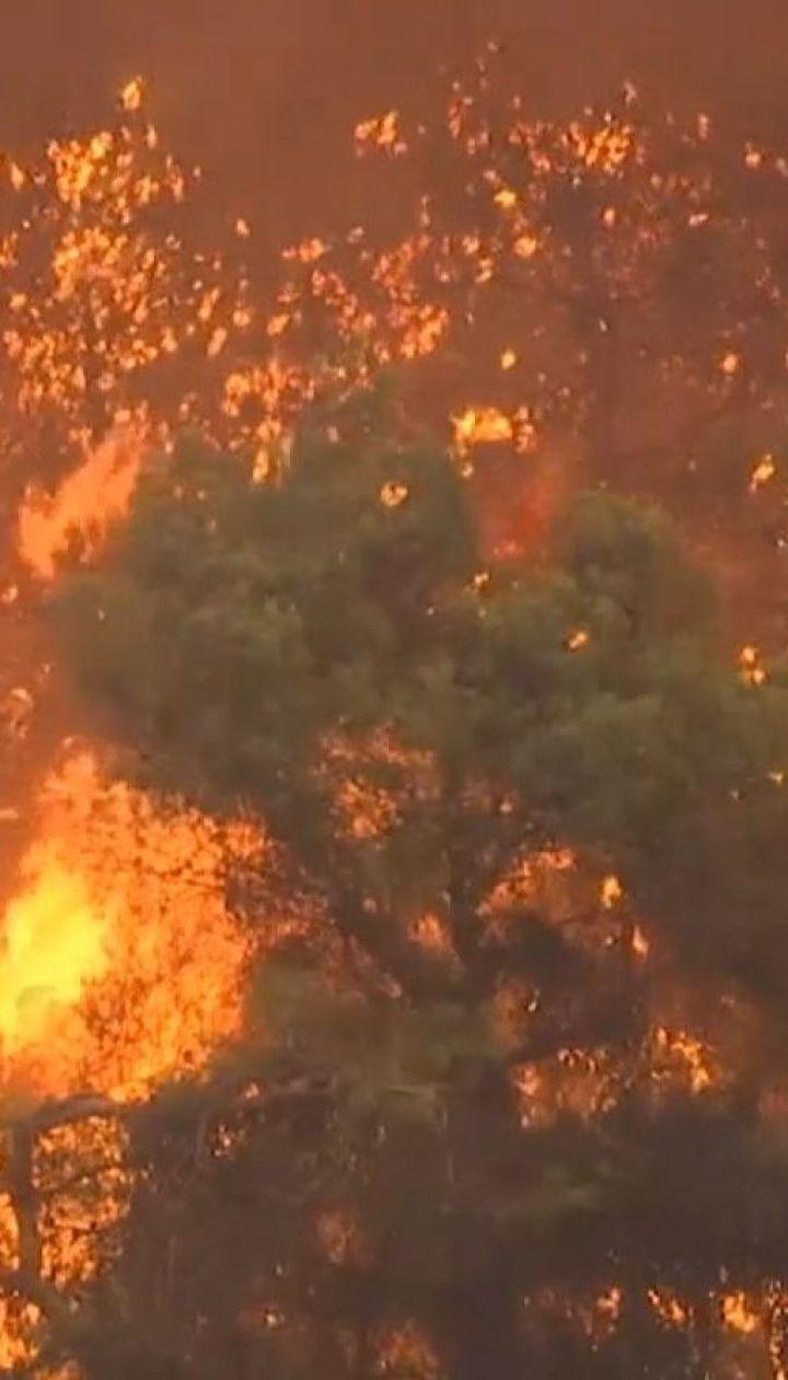 На грецьких островах Евіа проводять масову евакуація через лісові пожежі