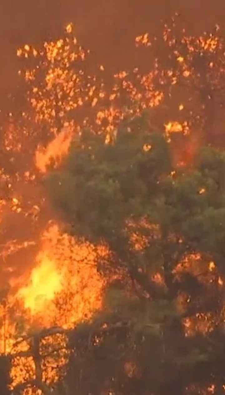 На греческих островах Эвиа проводят массовую эвакуация из-за лесного пожара