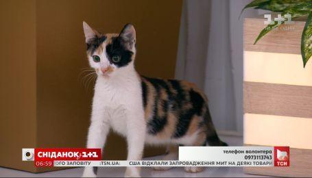 Три четырёхмесячных котёнка ищут семью