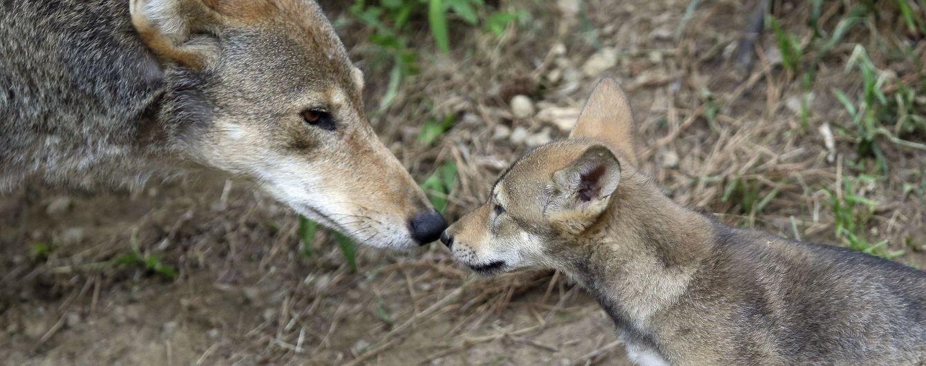 З лісів планети зникла половина всіх тварин. Як це сталося та чим загрожує людям — звіт WWF