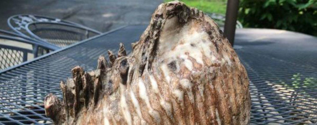 У США хлопчик натрапив на величезний зуб доісторичної тварини