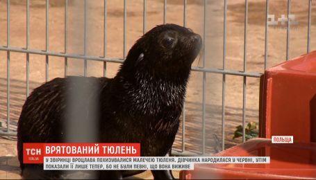 В зверинце Вроцлава похвастались новорожденным малышом тюленя