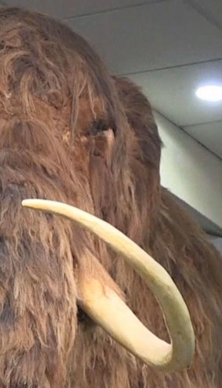 Чтобы спасти слонов, ученые предлагают отнести мамонтов к видам вымирающих животных