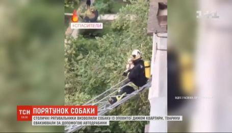 Столичные спасатели освободили собаку с увитой дымом квартиры