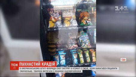 У США єнот намагався пограбувати автомат з їжею і застряг