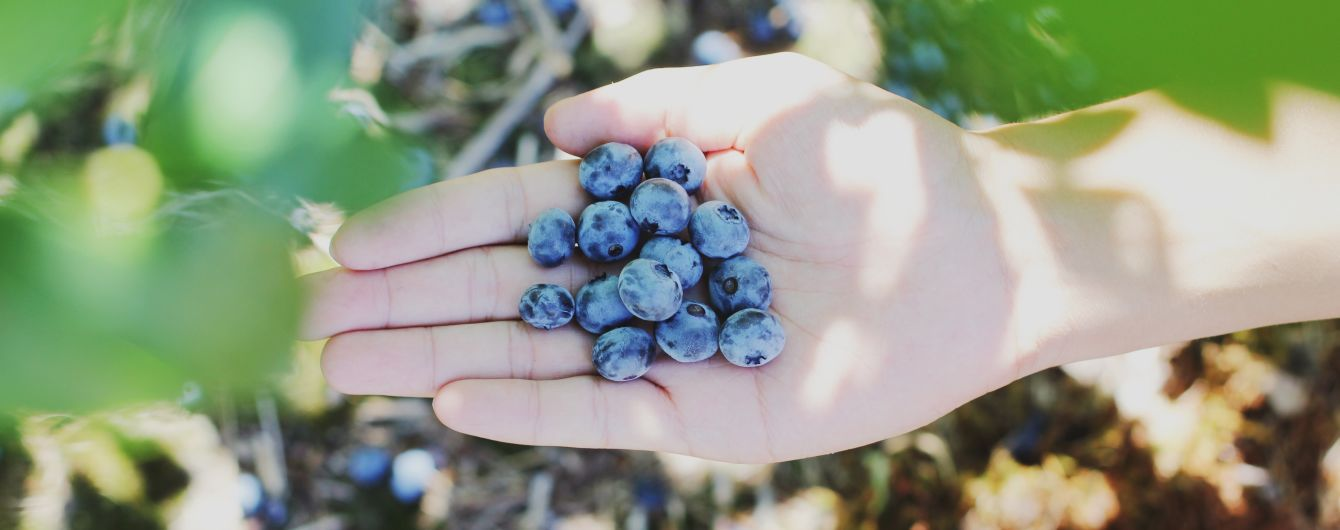 Збирала ягода та заблукала: у лісі на Прикарпатті зникла 56-річна жінка