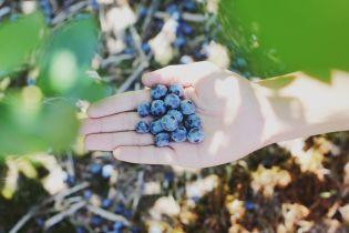 Собирала ягоды и заблудилась: в лесу на Прикарпатье пропала 56-летняя женщина