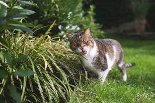Как защитить садовый участок от животных