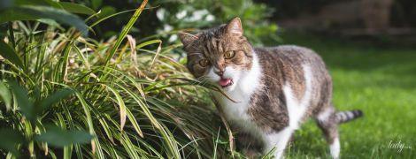 Як захистити садову ділянку від тварин
