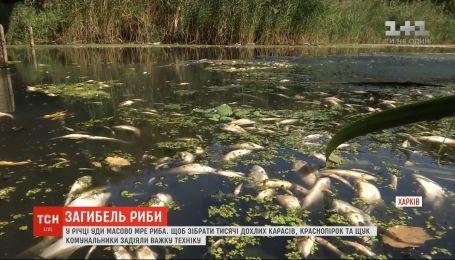 В одной из рек Харькова массово гибнет рыба
