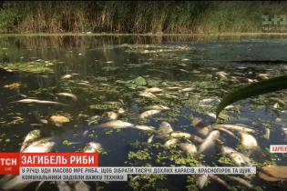 Падаль на берегах и ужасный смрад: в Харькове в реке Уды массово гибнет рыба