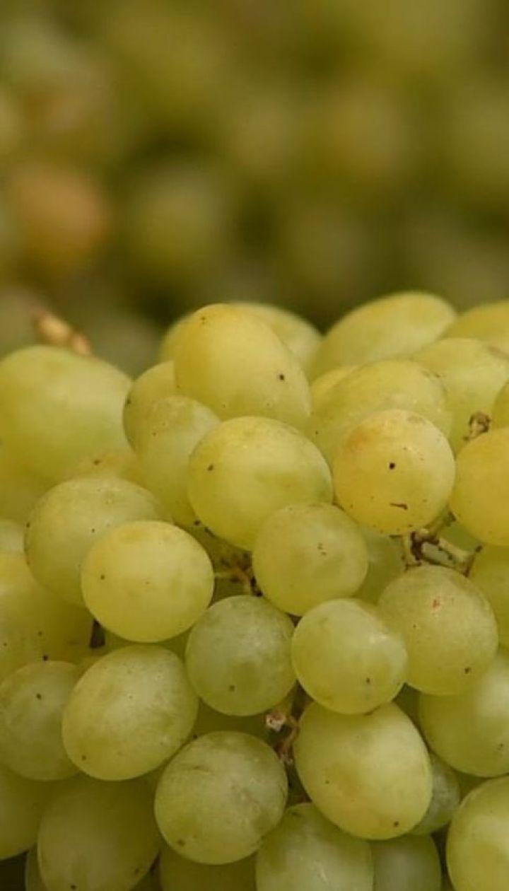 В Україні пік продажів вітчизняного винограду