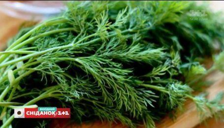 ТОП-5 корисних видів зелені