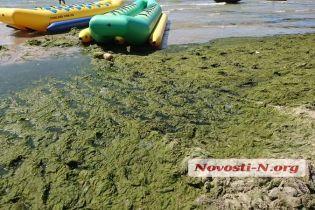 Пляж в Коблево позеленел от водорослей
