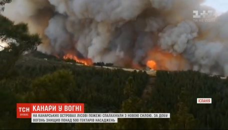 С новой силой: лесные пожары на Канарах за сутки уничтожили более 500 гектаров насаждений