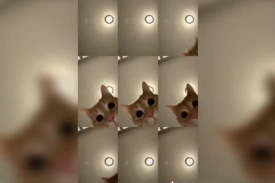 Школярка зняла кумедний ролик із котячими лапками і підірвала Мережу