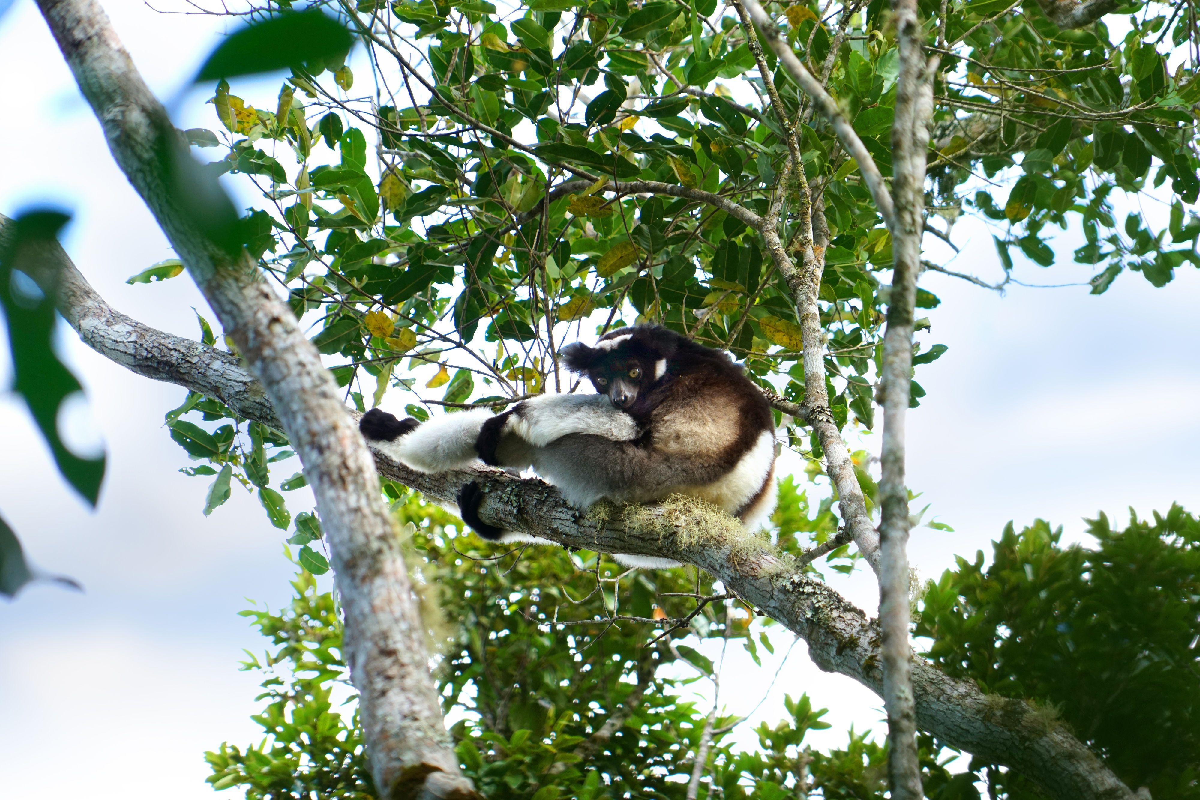 Мадагаскар, для блогів_9