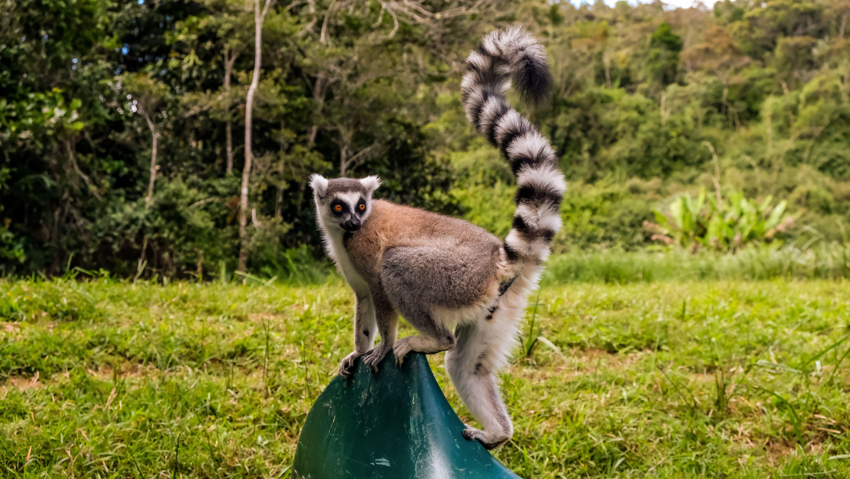 Мадагаскар, для блогів_10