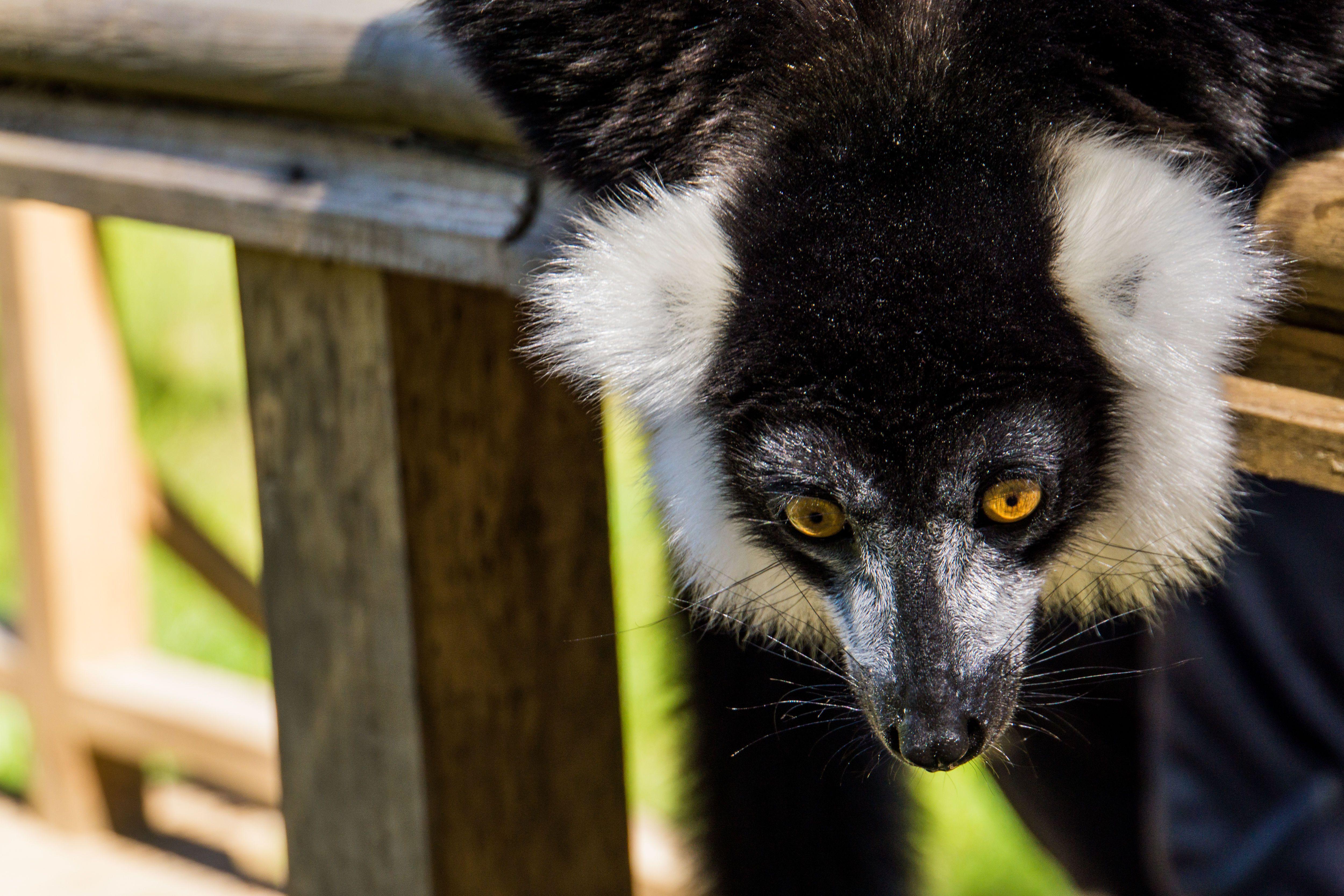 Мадагаскар, для блогів_13