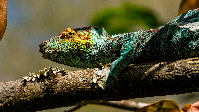 Мадагаскар, для блогів_15