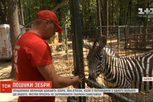 На околицях Харкова працівники звіринцю шукають зебру-втікачку