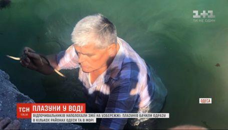 В Одессе на побережье отдыхающих напугали змеи