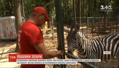 В окрестностях Харькова работники зверинца ищут сбежавшую зебру