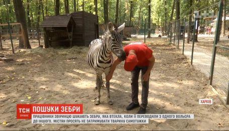 Третий день в окрестностях Харькова ищут пропавшую из экопарка зебру